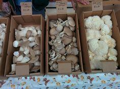 New Hampshire Mushroom Company New Hampshire, New England, Stuffed Mushrooms, Artisan, Vegetables, Food, Stuff Mushrooms, Essen, Craftsman