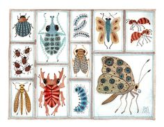 beetles weevils & flies No. 16 by Golly Bard, via Flickr