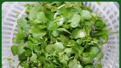 Watercress is a cruiferous plant grown for centuries as a mineral rich green leafy vegetable.  The health benefits of watercress are providing nutrition, boosting immunity, cancer preventive, and thyroid support. These health benefits begin with a single serving of watercress as a dietary supplement. Download the Premiere issue of Stay Healthy Magazine to learn more about this amazing food rich plant. Free Trial Subscription Link at http://joom.ag/oImp