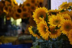 Sunflowers / David Fuller Photo  (by TheFullerView)