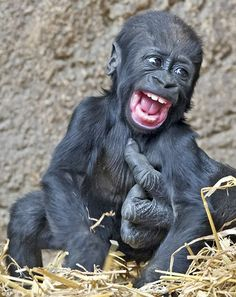 Tickle: Displaying an almost human response, five-month-old Jengo's eyes light up with joy and his mouth breaks into a huge grin as an adult...