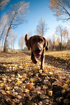 This photo taken by photographer, Jeff Diener, is a great example of getting down to the dog's level for a more interesting viewpoint. For more tips on capturing great images of your furry friends, read our Learn Explore article