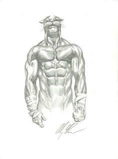 Wildcat pencil sketch by Alex Ross