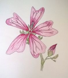 Latest drawing - 0.1 fine liner and coloured pencils