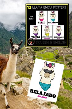 12 Llama emoji posters for your Spanish classroom. The perfect decor for back-to-school! Teach and practice 'Estar' expressions with these clever visuals by Profe Pistole, Resources for the Busy Spanish Teacher. Spanish Teacher, Teaching Spanish, J Balvin Songs, Emoji, Spanish Classroom Decor, Spanish Colors, Middle School Spanish, Spanish Activities, Teacher Organization