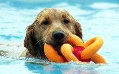 This Magical Toy Is The Only One Your Dog Will Need This Summer. Loopies, is a pretzel-shaped toy with six loops and squeakers. The toy is easy to kick, throw, catch, and even floats – making it perfect for a game of fetch or tug-of-war. Originally designed for children, the toy has even won the Oppenheim Gold Award.