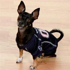 24 Best Texans Pet images | Texans, Houston texans, Texans football