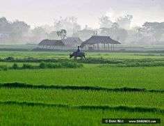 Nyaungshwe, Burma (Myanmar) - Rice field in Burma (Myanmar… | Flickr