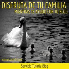Servicio Tutoría Blog
