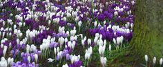 Groei & Bloei over tuinen en tuinieren