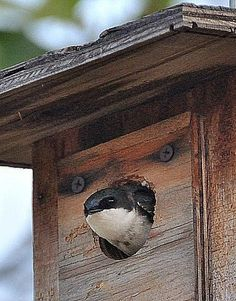 Learn how to get started adding bird houses to your backyard in five easy steps, including additional tips to make the most of all your bird houses.