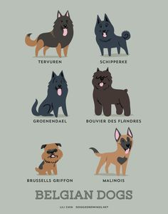 BELGIAN DOGS art print dog breeds from Belgium by doggiedrawings