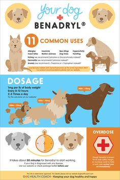 Dog Breeds 5 Things Dog Owners Should Know About Giving Benadryl To Dogs - Can you give your dog Benadryl? What dosage of Benadryl to give your dog? What are the side effects? Everything you need to konw about giving Benadryl. Dog Care Tips, Pet Care, Dog Hives, Dog Health Tips, Pet Health, Dog Information, Dog Facts, Dog Owners, Dog Training