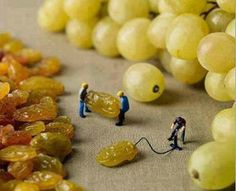How grapes are made, here is the answer