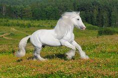 shire horse | Shire Horse - Urlaub mit Pferden : Reiturlaub : Reiterferien : reiten ...