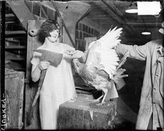 Mrs. William E. Dever holding a hatchet and standing next to a turkey in Chicago, Illinois, 1926. Photograph by Chicago Daily News. DN-0080759 #Thanksgiving #Chicago #history #turkey #holiday #food