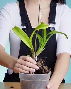 Orchid Flower Arrangements, Orchid Planters, Orchids Garden, Garden Plants, Indoor Plants, Orchid Terrarium, House Plants Decor, Plant Decor, Orchid Plant Care