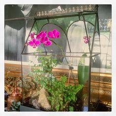 "Angelo on Instagram: ""Wardian Cases for the win 🌱🤘🏼 #flowers #terrarium #diyterrarium #wardiancase #orchids #climatecontrol #nature #grow #homegrown #LA…"" Terrarium Diy, Terrariums, Rock Path, Trellis, Bird Houses, Indoor Plants, Orchids, Scene, Cases"