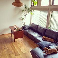 ヴィンテージ家具をはじめ、ひとつひとつのアイテムがとても素敵。 わんちゃんもリラックス出来る、落ち着いたインテリアですね。