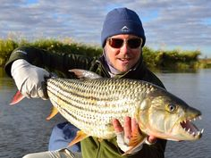 tiger from the Zambezi. Fishing Gifts, Fishing Reels, Tiger Fish, Gone Fishing, Freshwater Fish, Fresh Water, Woods, Hunting, Africa
