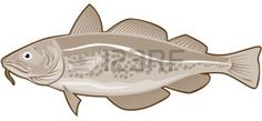 codfish - Google Search