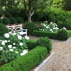 50 Mooiste hortensia's Landscaping Ideas To Inspire You 017 - DECOOR Source by Boxwood Garden, Hydrangea Landscaping, Garden Shrubs, Front Yard Landscaping, Landscaping Ideas, Boxwood Hedge, Luxury Landscaping, Pea Gravel Garden, Southern Landscaping