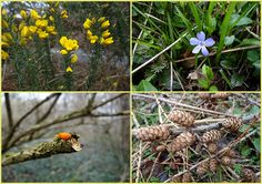 Had a walk in the woods inbetween the showers.        30th March 2015