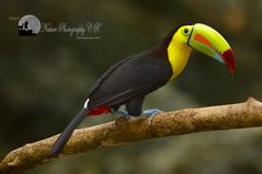 Costa Rica Nature Pavilion - Costa Rica Tropical Bird Photography