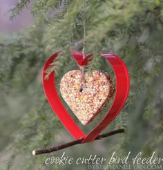 Hanging Cookie Cutter Bird Feeder | Homemade Bird Seed Cakes - bystephanielynn