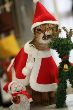 Cheeky Christmas cat