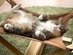 Maru has a hammock!