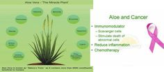 BEST TIPS FOR HEALTHY AND DISEASES: Aloe Vera, Cancer Enemy Abnormal Cells, Natural Supplements, Reduce Inflammation, Amino Acids, Healthy Tips, Aloe Vera, Cancer