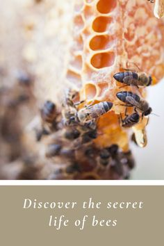 Honeybees are VIP residents at Babylonstoren, South Africa. 🐝 Learn all about these hardworking insects and the basics of beekeeping at our Workshpops. | Babylonstoren | Franschhoek | Cape Winelands | Beekeeping | Bees | Honeybees | Save the bees | Honey | Beekeeping Aesthetic | Apiary | South Africa #babylonstoren #franschhoek #capewinelands #beekeeping #honeybees #pollination #beeswax #honeycomb Greenhouse Restaurant, Beekeeping For Beginners, Spice Garden, Master Baker, South African Recipes, Water Wise, Farms Living, Save The Bees, Farm Yard