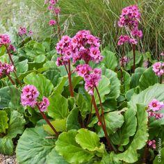 Backyard Plants, Garden Plants, Hortensia Rose, North Facing Garden, Landscape Design, Garden Design, Comment Planter, Decoration Plante, Cottage Gardens