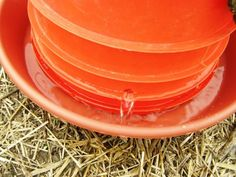 chicken waterer, water bucket