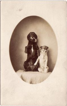One Bark at a Time: Vintage dog photos