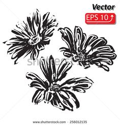 black daisy flower watercolor Daisy Vector Flowers isolated on white background vector illustration - stock vector