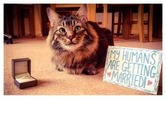 How to announce your engagement with your cat!