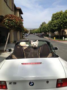 The White Dog Blog