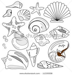 Sea Shell Collection is hand drawn original artwork. Sea Shell Collection is hand drawn origin Shell Collection, Ocean Art, Coloring Book Pages, Beach Art, Oeuvre D'art, Line Drawing, Art Lessons, Sea Shells, Illustration