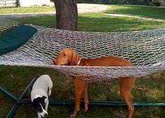 I'm not sure what all the fuss about hammocks is about. #hammock #relaxing #BeggedBorrowedandStollen #gusandkeno