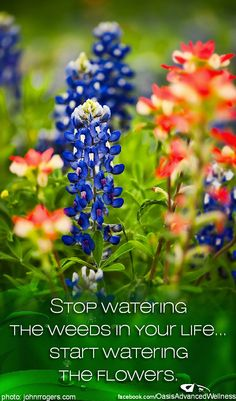 Stop watering the weeds in your life...start watering the flowers.