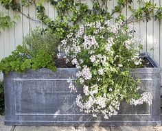 A compact courtyard garden in west London is a lesson in how to revamp a tiny space