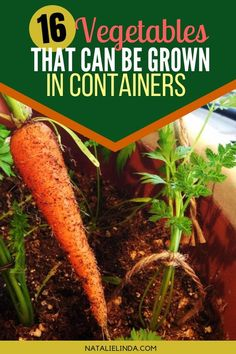 Take a look at these 16 vegetables that can all be grown in containers and raised garden beds! In fact, many of them grow more successfully in containers than in the ground! # Gardening for beginners 16 Vegetables That Grow In Containers - Natalie Linda Growing Vegetables In Containers, Container Gardening Vegetables, Vegetables Garden, Garden Container, Veggies, Large Containers, Succulent Containers, Container Flowers, Organic Vegetables