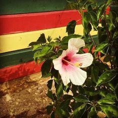 Rasta flower at LBC! . #staylittlebay #littlebay #littlebaycabins #jamaica #Negril #westmoreland #travel #beach #vacation #deals #deal #sea #ocean #sun #waves #swimming #travelgram #funinthesun #reggae #irie #rasta #praisejah #negriljamaica #jamaicabeach #nature #traveling #tourism #wanderlust #destination #adventure #pinterest #instagram #ifttt