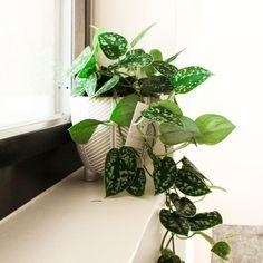 """Sandra on Instagram: """"▫️Une plante▫️ Trouver ça place. J'aime les plantes, j'aime aller flâner chez les fleuristes pour voir les nouvelles variétés et les…"""" Place, Plant Leaves, Instagram, Florists, Baby Born"""