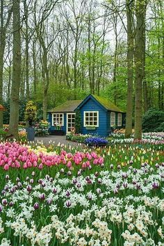 Blue house and flowers