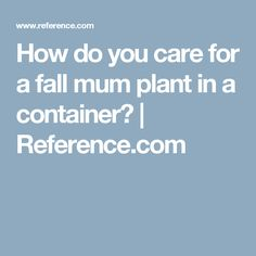How do you care for a fall mum plant in a container? | Reference.com