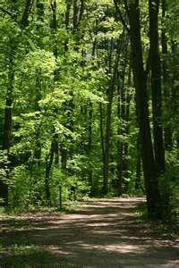 Kellogg Forest in Battle Creek Michigan...