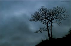 Lonely Wakes II by nighty.deviantart.com on @DeviantArt